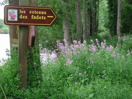 Les Coteaux des Fadets  / Boucle 2