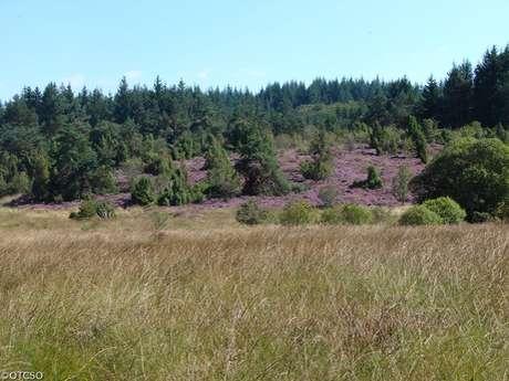 Sentier de découverte des landes et tourbières de la Mazure : Petite boucle