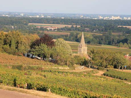 Saint Martin sous Montaigu SM2 : Balade verte Des premiers crus au village