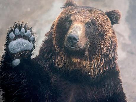 Les ours de A à Z