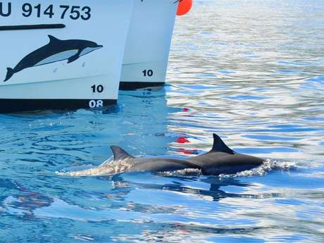 ZARLOR THRILLS AND SPILLS BOAT-BASED WHALE-WATCHING