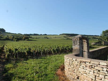 Givry : Découverte nature de la Côte Chalonnaise