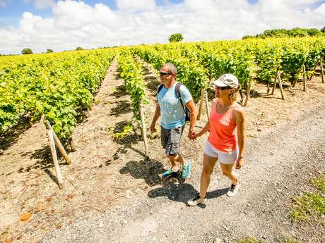 Randonnée entre Vignes et campagne
