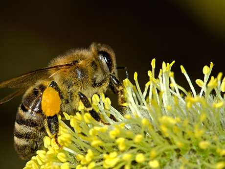 Fleurs et pollinisateurs