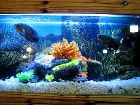 Cercle aquariophile