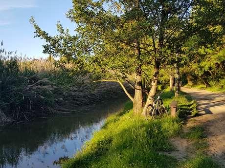 Les berges de l'Aude: Mayrevieille-Hippodrome de la Fajeolle-Le-Païcherou