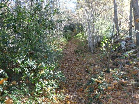 Itinerario - Desde el puente de Petches Rial por el camino Llata