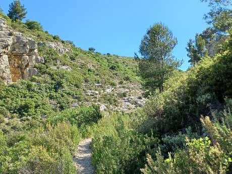 Trail sous le Mont Julien