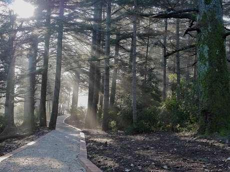 Chemin des cèdres