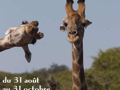 Drôle d'animaux Vol.2
