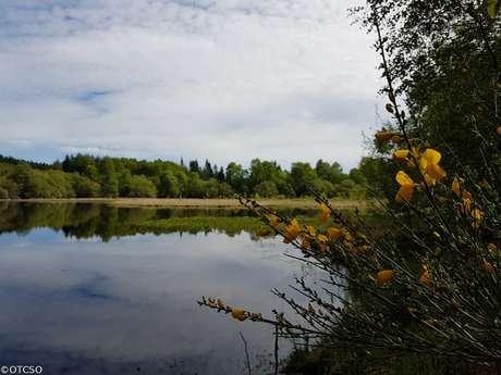 Sentier de découverte de la tourbière de l'étang du Bourdeau
