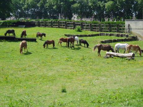 Centre équestre et poney club - Gîte loisirs Méry