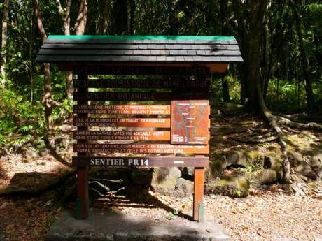Wald Forêt de Mare Longue