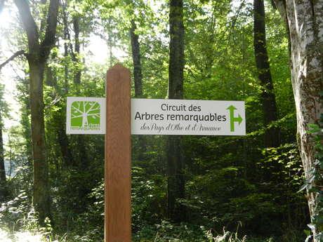 Circuit des arbres remarquables