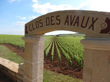 Circuit 12 Through some of Beaune's Premiers Crus
