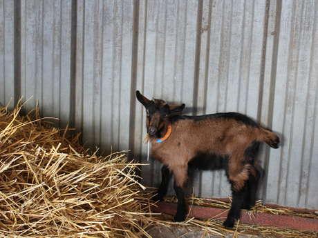 La chèvrerie de la Dhuys