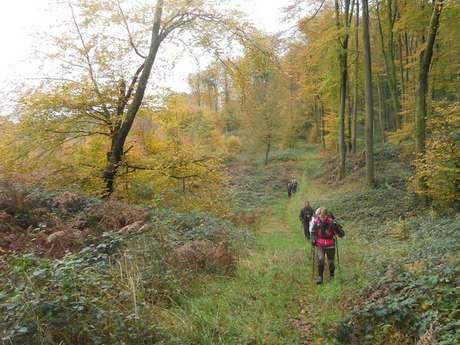 Randonnée pédestre en forêt de Retz