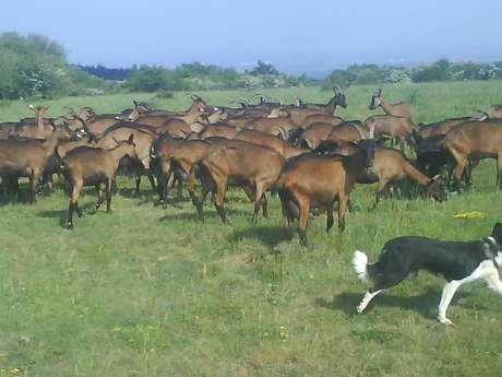 La Chèvre de Russilly