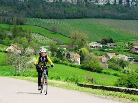 Bike and Wine Tours by Active Tours