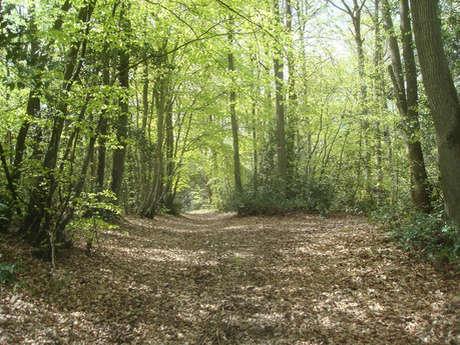 Saint-Germain le Vasson woods