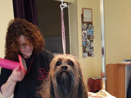 "Salon de toilettage canin ""Le Cabotin"""