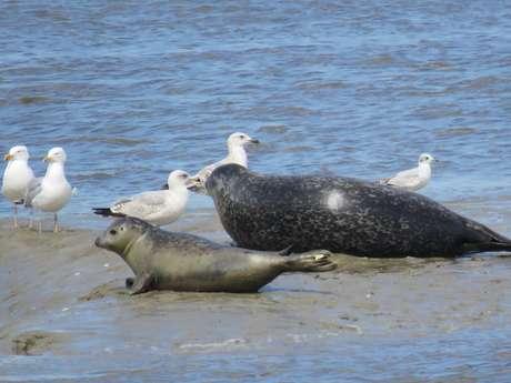 Nos amis les phoques