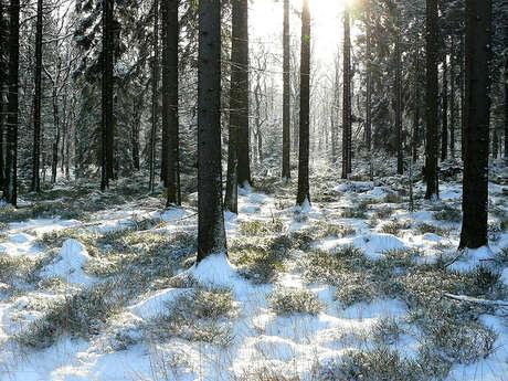 Forêt de Grimbosq