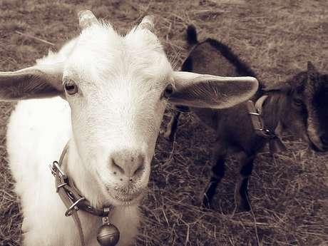 Chambre d'hôtes Aux Deux Chèvres