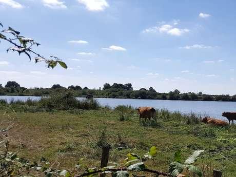 Moutiers-sous-Argenton - Les landes de l'étang
