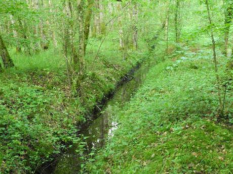 Espace naturel sensible de la Ferté-Vidame