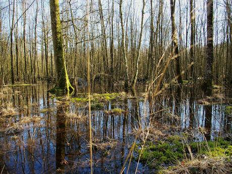 Forêt humide des Mousseuses