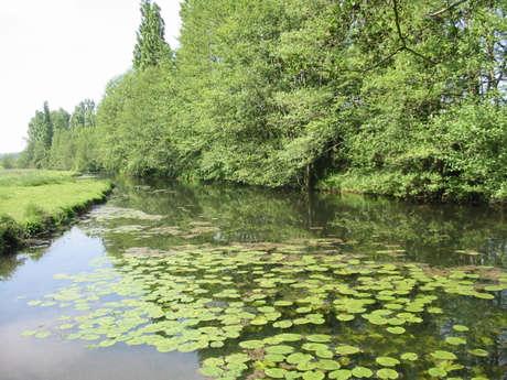 Pêche en rivière 1er et 2eme catégorie - Les hauts de l'Eure