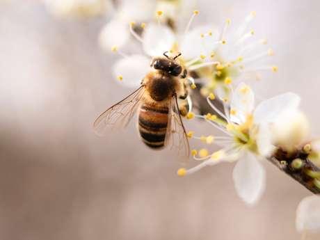 Biodiversité locale, discrète et parfois protégée
