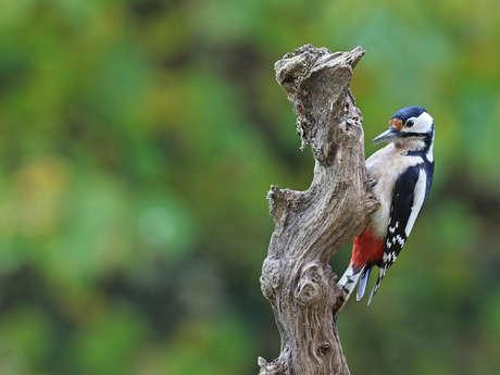 Sortie nature à la découverte de la faune du Bois des Gâts
