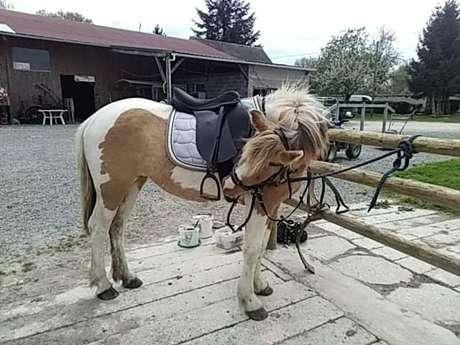 Poney Club du champ brulé- Tous à cheval