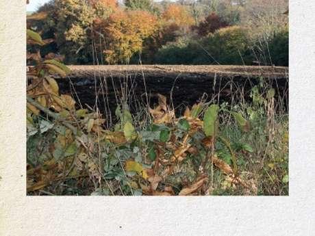 Balade d'automne dans la vallée du Jaudy