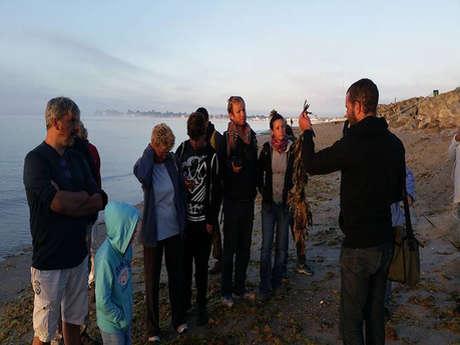 Balade nature - découverte du bord de mer