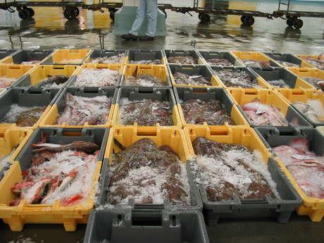 Visite des coulisses de la criée - Dégustation de langoustines - Visite libre d'Haliotika