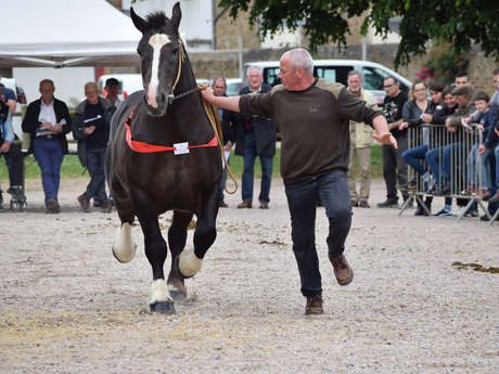 Concours National Cheval Breton
