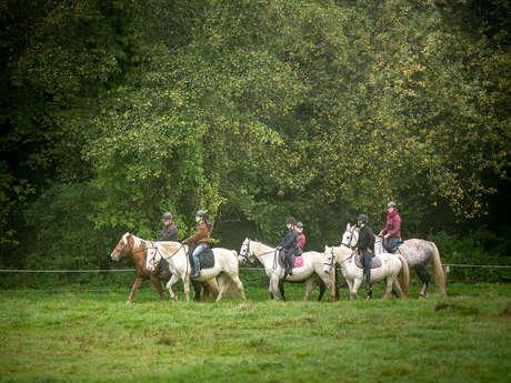 Les chevaux du Coat