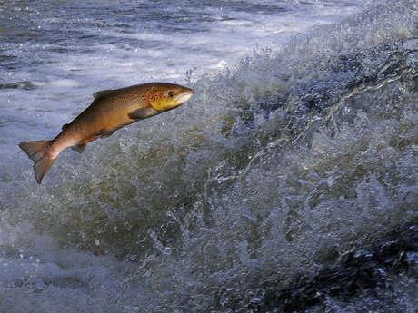 Cartes de pêche