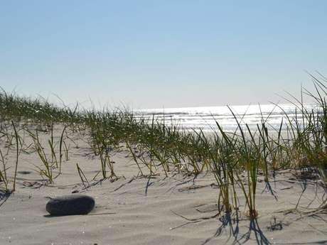 Les Balades Nature de Steven - Rand'eau née des dunes