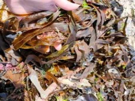 Méli-Mélo des plages - Découverte nature organisée avec la CCHPB