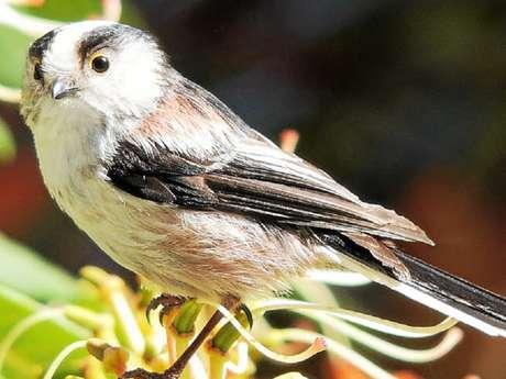 Balade Nature - Initiation au monde des oiseaux