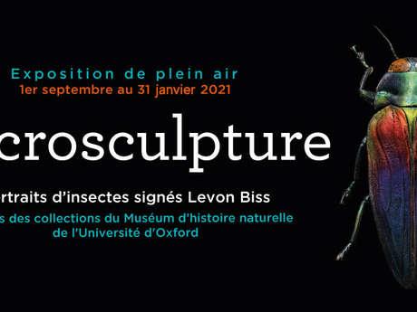 Microsculpture Portraits signés Levon Biss