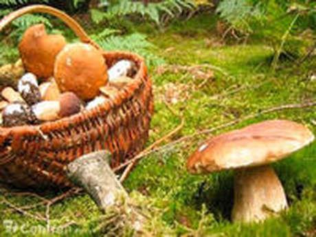 Randos pédagogique : à la découverte des champignons