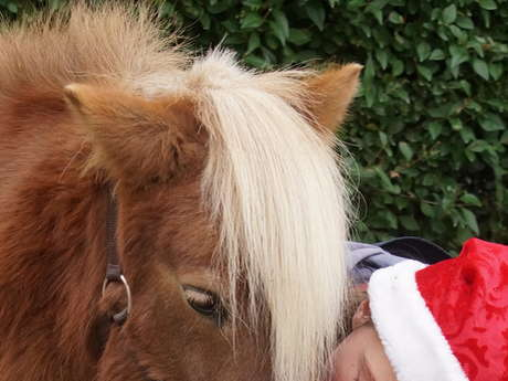 Petit paysan s'occupe des poneys