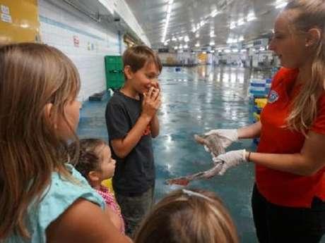 Visite guidée - Découverte des poissons - Visite libre des expositions de Haliotika