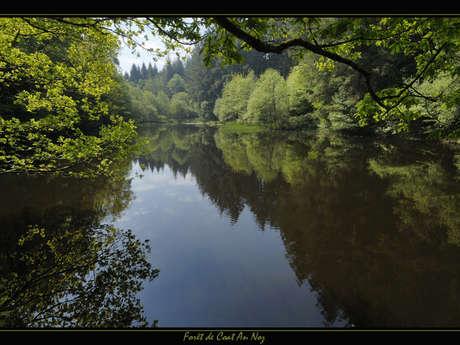 Forêt de Coat-an-Noz
