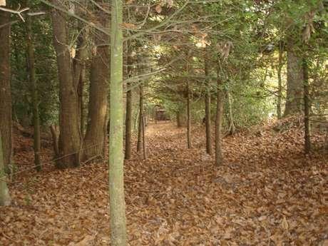 Enquête nature... en forêt